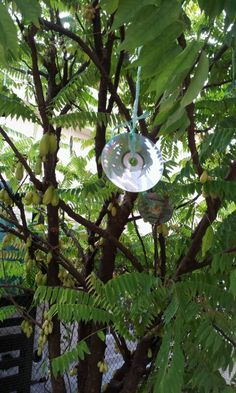 unwanted DVD to protect fruits from birds