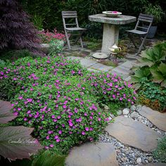 Geranium sangunieum «Max Frei». H7, blomstrer fra mai til august🤗👒#geranium#geraniummaxfrei #bunndekkende #plante #stauder #staudebed…