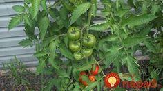Viete, ktoré rastliny si v záhrade navzájom pomáhajú a ktoré si naopak škodia?