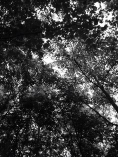 Silent, in the trees