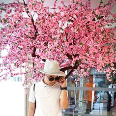 The Cherry Blossoms is rampant in the Philippines. :) ❤❤❤ I love to be in Japan. See you soon!! Be inspired by Landmark Mall theme.  #blossom #bloss #blossoms #blossomtree #japan #ph #philippines #phil #cherry #loving #lovingit #fashion #gay #gaymen #fierce #gayguy #gay #men #hot_shotz #hot #fierce #fiercesociety #fiercer #fiercereads #fiercereadsphotochallenge #instagood #instagay #instago