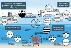 effects of acidification - Szukaj w Google