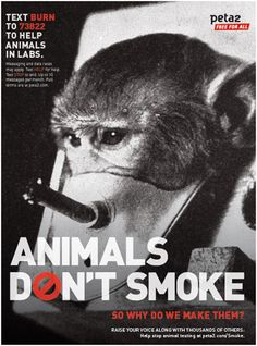 Animals Don't Smoke color poster