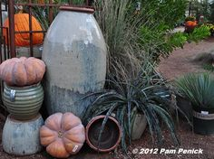 Support Your Independent Nursery: Hill Country Water Gardens & Nursery GIVEAWAY   Digging