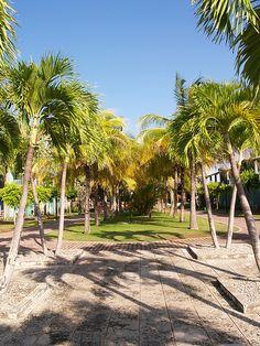 The view towards the main hotel lobby of the Riu Turquessa Varadero Cuba from the grounds [shared]