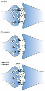 Compound Enhances SSRI Antidepressant's Effects in Mice - A synthetic compound, decynium-22, is able to turn off SERT in the brain, enhancing the effectiveness of SSRIs.