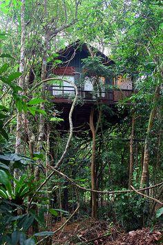 Khao Sok Tree House / The Green Life <3