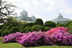 Starting from tomorrow, the Royal Greenhouses of Laeken will open to the public for 3 weeks! Don't miss this magnificent combination of botanical splendor and stunning architecture!