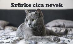 Szürke cica nevek, cirmos macska nevek - Állatnevek Animals, Animales, Animaux, Animal, Animais