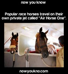 air horse one<<< yet another useless fact that I will remember for the rest of my life. Unlike all the important ones