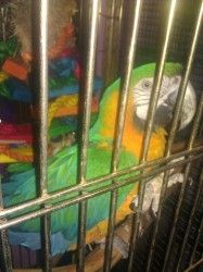 Adopt Mojo on | Adoptable Parrots | Parrot rescue, Parrot
