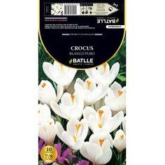 Bulbos Batlle Crocus blanco puro