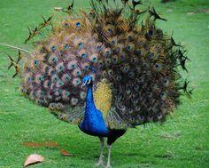 Fugler Birds, Animals, Animales, Animaux, Animal, Animais