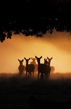 A herd of deer casting shadows in the forest