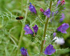 Natura. Foto di Lucia Agliuzza.  http://www.lasiciliainrete.it