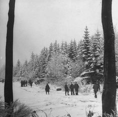 1945, Belgique, Lierneux, Des chars US M4A1 Sherman de la 3rd US Armored Division embusqués dans la forêt près du village