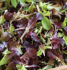 Amazon.com: Lettuce Wildfire Mix Multi 1000 Open Pollinated Seeds by David's Garden Seeds: Patio, Lawn & Garden