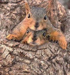 """Picture Used on NSVH.  October is Squirrel Awareness Month Album.  """"Let me see!"""" """"Let ME see!"""" """"You always see!"""""""