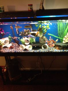 55 Gallon Cichlid Tank ~~~ I like the DIY pvc pipe and slate decorations.