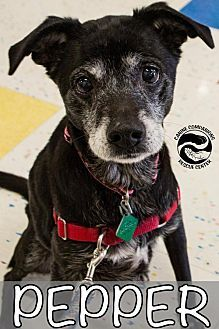 Find A Pet To Adopt Petsmart Charities Pets Adoption Animals