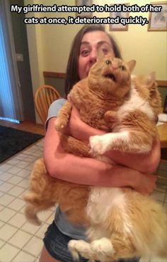 My Girlfriend Attempted to Hold Both Her Cats at Once - LOLcats is the best place to find and submit funny cat memes and other silly cat materials to share with the world. We find the funny cats that make you LOL so that you don't have to. Cute Funny Animals, Funny Animal Pictures, Funny Cute, The Funny, Funny Pics, Super Funny, Humorous Animals, Funniest Animals, Random Pictures