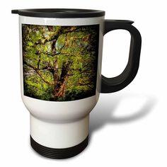 #coffee #mug #drivesafe #commuter #travel #cup #drink #gifts #art Amazon.com: DYLAN SEIBOLD - PHOTOGRAPHY - LARGE TREE - 14oz Stainless Steel Travel Mug (tm_244496_1): Kitchen & Dining