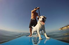 Le stand up paddle et les chiens ! Sup Stand Up Paddle, Sup Paddle, Gopro, Sup Girl, Yacht Builders, Offshore Wind, Sup Yoga, Standup Paddle Board, Remo
