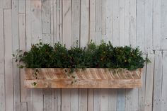 Image result for london window boxes