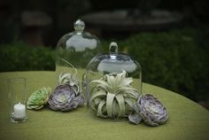 Airplants in bell jars and succulents make unique and organic wedding centerpieces. Floral Design: Cherries Flowers.