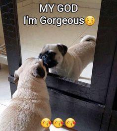 Pug funny More