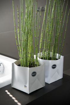 Ecological and multifunctional! Survival collection