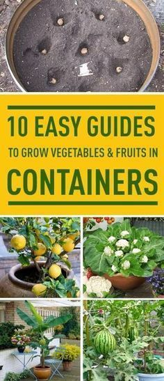 Don't have a garden? No problem. Follow these easy guides to grow various vegetables and fruits indoors. by kelli