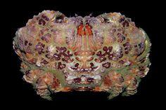[Strange and Funky Animal Photographer] Arthur Anker Crab Stuffed Shrimp, Beautiful Sea Creatures, Life Form, Beautiful Fish, Art Of Living, Ocean Life, Marine Life, Under The Sea, Crabs