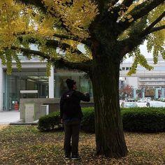 資料館脇の銀杏の木と息子  #原爆資料館