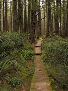 Sand Point Trail, Olympic National Park.