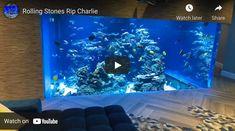 Reef Aquarium, Saltwater Aquarium, Corals, Latest Video, Rolling Stones, Messages, Videos, Link, Saltwater Tank