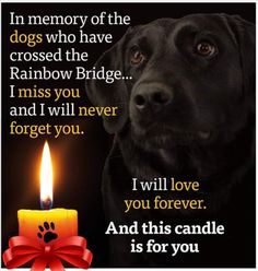 Saved to Free Dog Quotes Love Loyalty compassion paw prints a voice I Miss You, I Love You, Dog Quotes Love, Photo Pic, Never Forget You, Free Dogs, Paw Prints, Rainbow Bridge, Love You Forever