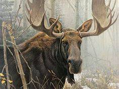 Vintage Art Robert Bateman 2 in 1 Bull Moose 1978 Goshawk Detail 1973 Hawk Wild In excellent condition! Measures appx x Front: Bull Moose 1978 - color portion measures appx x Back: Goshawk Detail 1973 - measures appx x Moose Deer, Bull Moose, Moose Art, Moose Lodge, Wildlife Paintings, Wildlife Art, Animal Paintings, Moose Pictures, Cross Paintings