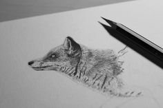 Portrait of a hopeful fox II on Behance