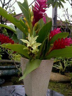 GinGer Flowers