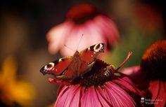 cool Fotografie »o. T. 04 @ Flowers«,  #Blumen #Tiere