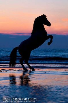 Horse on We Heart It.