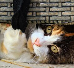 Photograph Mille by Jane Bjerkli on 500px