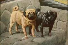 http://chestofbooks.com/animals/dogs/Intimate-Study/images/Pugs.jpg
