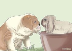 Tips for how to introduce a dog and a rabbit