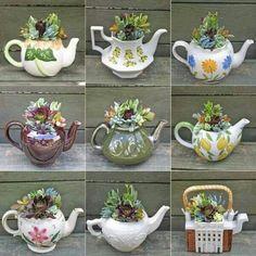 For suculent plants.