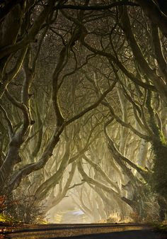 The Dark Hedges, Co Antrim, Ireland by Gary McParland