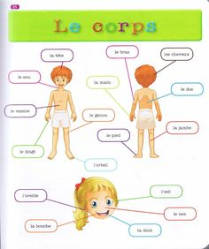 Source: Mon premier dictionnaire de Français Larousse French Language Lessons, French Language Learning, French Lessons, French Flashcards, French Worksheets, French Teaching Resources, Teaching French, French Body Parts, Basic French Words