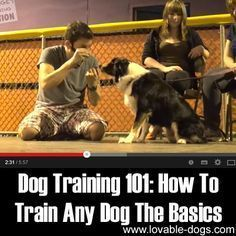 Please Share This Page: Photo – www.youtube.com/watch?v=jFMA5ggFsXU I came across this awesome video by Zak George's Dog Training Revolution and it teaches you how to train your dog with the basic tricks. In this video, he is teaching you how to get your dog to look at you with the use of a clicker method. …