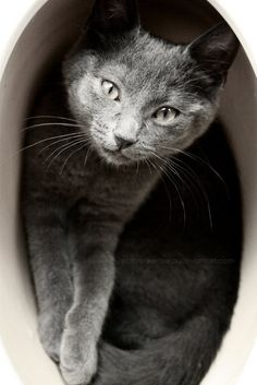 """""""Cats have exceptional vision, but they never see your flaws."""" --Author Unknown"""